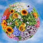 цветение земля май