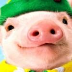 новогодняя свинья 2019